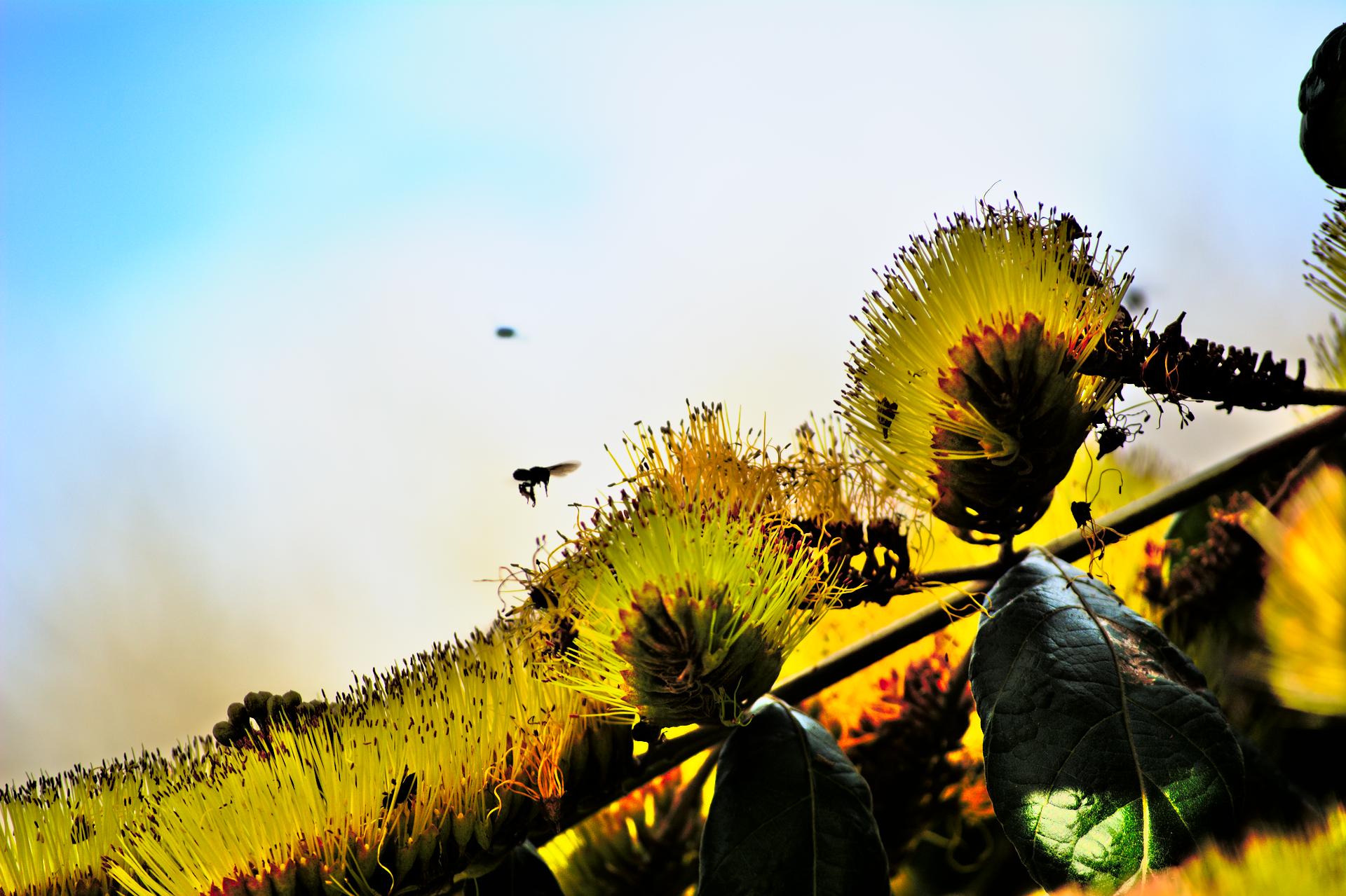 Natureza 2