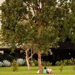 Árvore da juventude